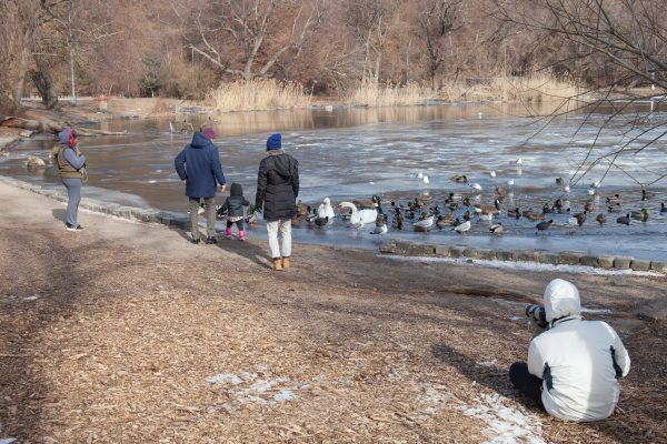 Brooklyn, New York City. Saturday, February 2, 2019 - Photographer taking pictures and people watching ducks, swans, gulls, etc. in Prospect Park. Credit: Photo by LoveIsAmor.com