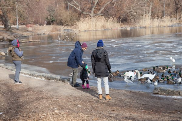 Brooklyn, New York City. Saturday, February 2, 2019 - People watching ducks, swans, gulls, etc. in Prospect Park. Credit: Photo by LoveIsAmor.com