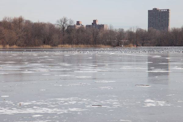 Brooklyn, New York City. Saturday, February 2, 2019 - Most of the lake in Prospect Park is frozen. Credit: Photo by LoveIsAmor.com