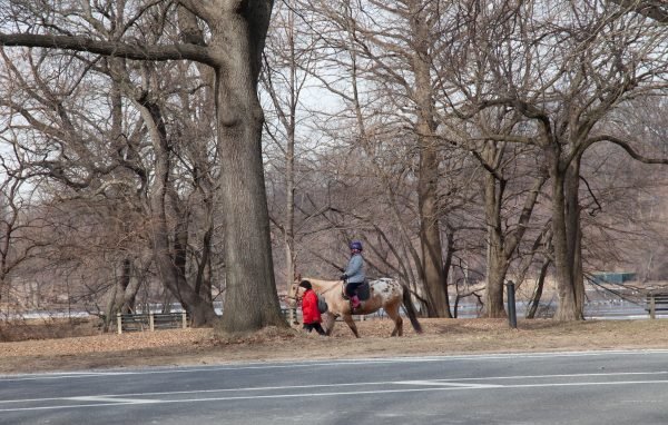Brooklyn, New York City. Saturday, February 2, 2019 - Woman riding a horse in Prospect Park. Credit: Photo by LoveIsAmor.com