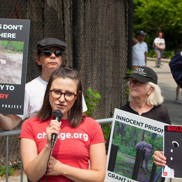 Bronx, New York City. Saturday, June 1, 2019 - Rally in support of Happy's freedom. Happy is a wild-born elephant held alone in captivity at the Bronx Zoo. The rally was organized by the Nonhuman Rights Project and it was joined by Change.org, CompassionWorks International, Voters For Animal Rights, In Defense of Animals, and Animal Cruelty Exposure Fund. Activists called for recognition of Happy's fundamental rights and her transfer to sanctuary. During the rally, NhRP attorney gave updates on their litigation on behalf of Happy and other efforts to obtain rights for autonomous nonhuman animals. Credit: Photo by LoveIsAmor.com
