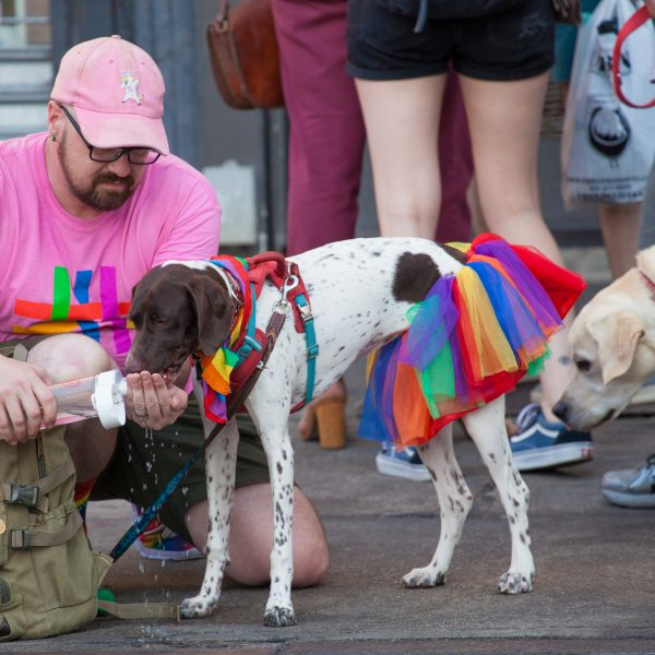 Saturday, June 8th, 2019. Brooklyn, New York City - Man and his dog at the Brooklyn Pride Parade/March. This year, Brooklyn celebrated the 23rd Annual Brooklyn Pride Parade/March. Brooklyn Pride was ranked within the top 10 of the 20 best places in the US to celebrate pride by matadornetwork.com. This year is the 50th anniversary of the Stonewall revolution. Credit: Photo by LoveIsAmor.com