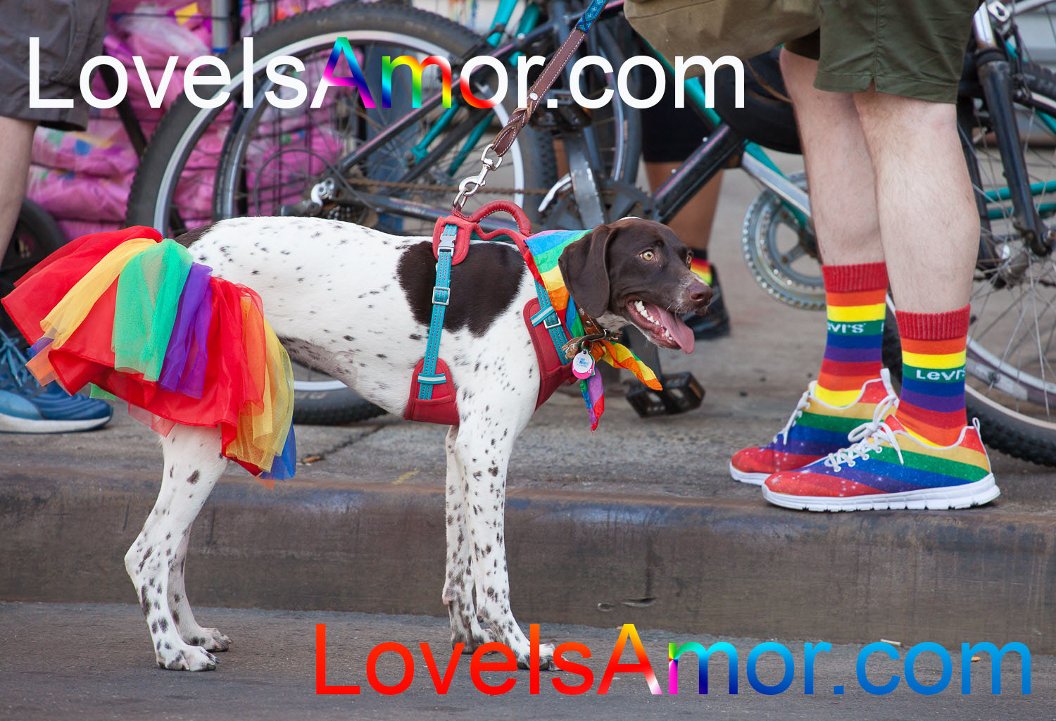 Saturday, June 8th, 2019. Brooklyn, New York City - Man and his dog at the Brooklyn Pride Parade/March. This year, Brooklyn celebrated the 23rd Annual Brooklyn Pride Parade/March. Brooklyn Pride was ranked within the top 10 of the 20 best places in the US to celebrate pride by matadornetwork.com. This year is the 50th anniversary of the Stonewall revolution. Photo by LoveIsAmor.com
